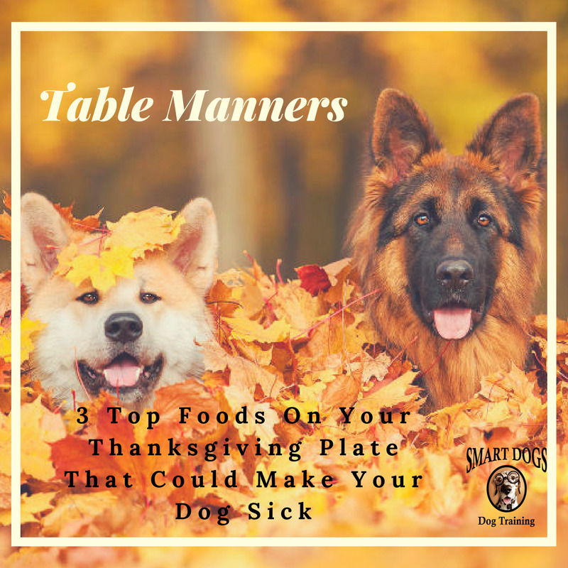 Good Table Manners for your Dog