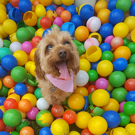 Dog in the Ball Pit