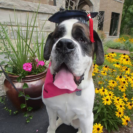 Dog Training Graduate