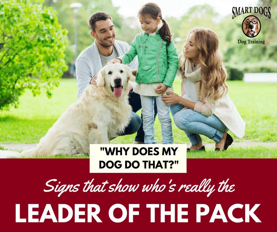 Leader fo the Dog Pack