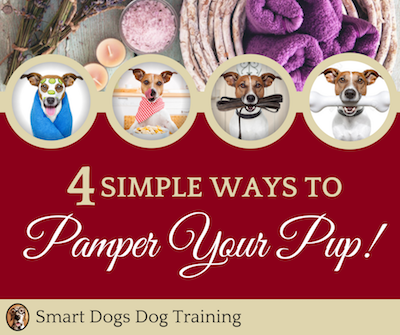 Pampering your pup!