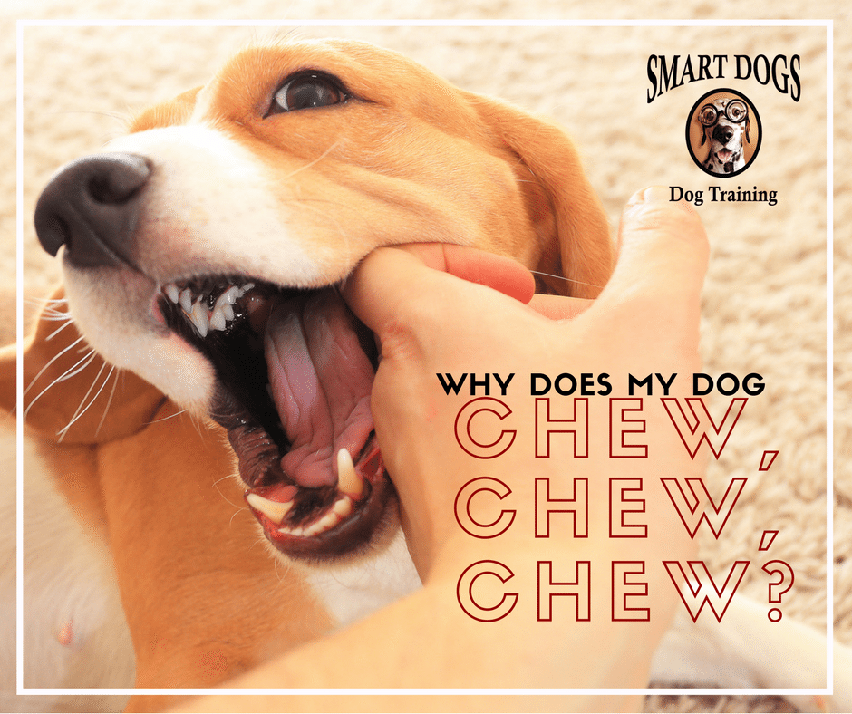 Why does my dog chew?