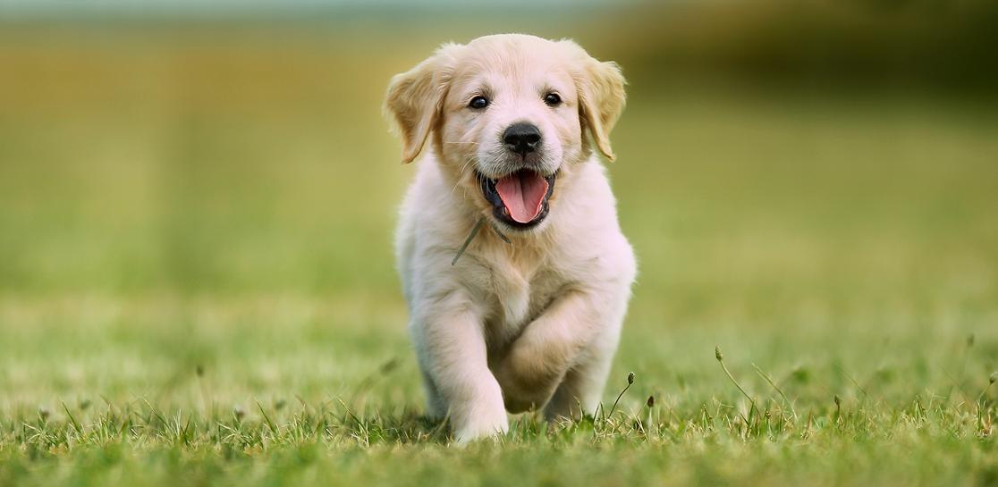 Dog Running Amuck